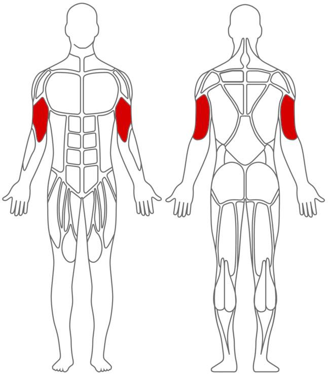 Muskeln: Arm-Übungen