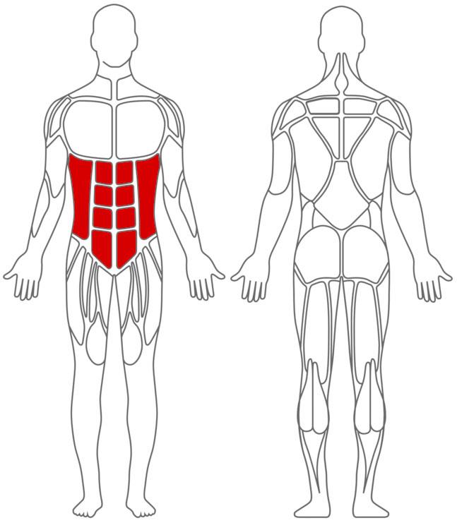 Muskeln: Bauch-Übungen