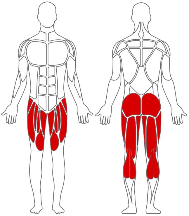 Muskeln: Bein-Übungen
