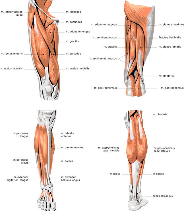 Muskeln - muskelpower.de