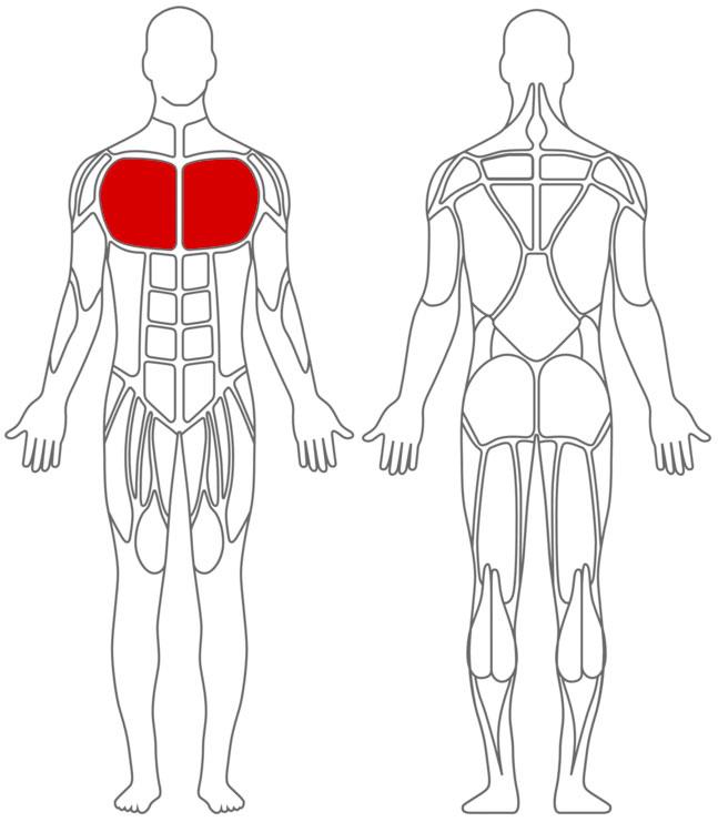 Muskeln: Brust-Übungen