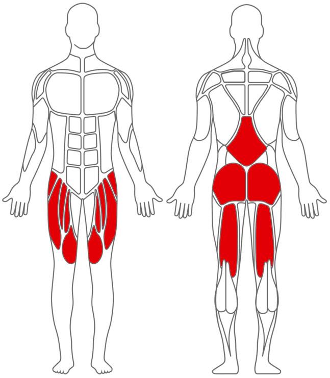 muskelaufbau während diät