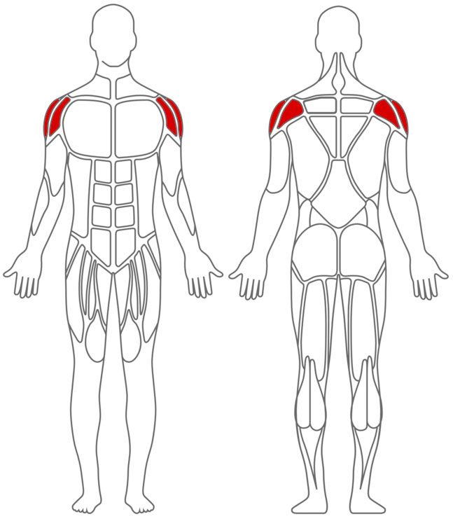 Seitheben Mit Kurzhanteln Muskelpower De