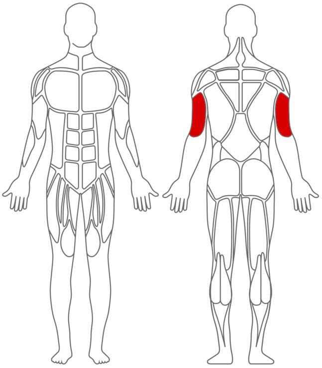 Muskeln: Trizeps-Übungen